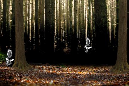 Skunks in the woods