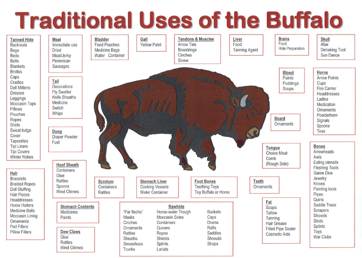 Traditional Uses of the Buffalo